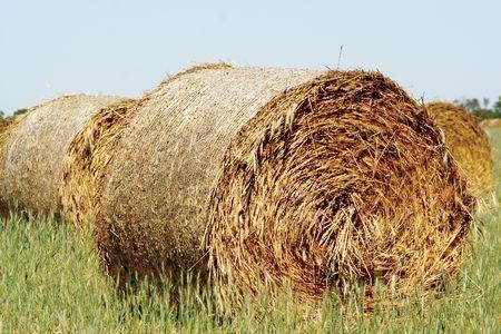Straw hay bale Stock Photo - 2435952
