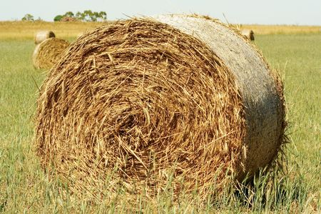 Straw hay bale Stock Photo - 2435953
