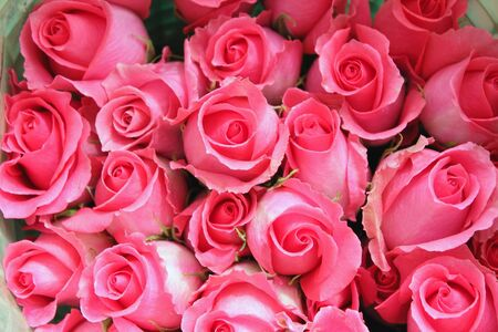 Big bunch of pink roses from the top Imagens