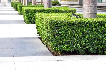 園芸植物の装飾