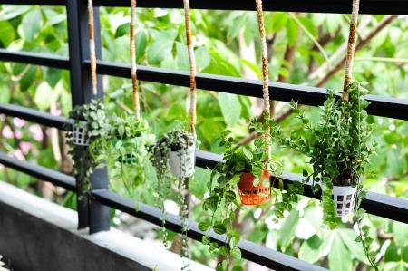 small plant decor photo