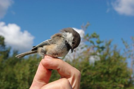 Photo of a titmouse on a hand close up against a  natural background Stock Photo
