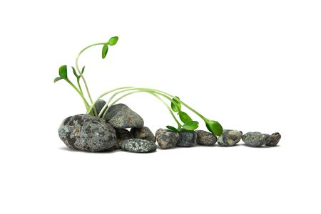 stones and plant on the white background Stock Photo