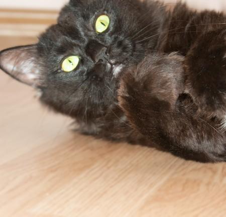 stark: Stark �berrascht schwarze Katze mit der gedr�ckten Pfoten Lizenzfreie Bilder