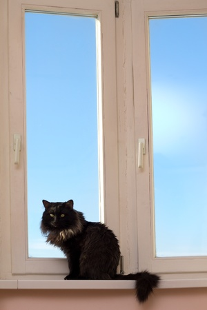 House cat at a window