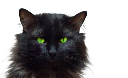 Black Cat Portrait 3 Stock Photo - 10277992