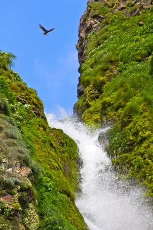 streams: Water falls in waterfall, beauty in nature. Stock Photo