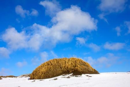 icecaps: Tundra in winter  ( Commander Islands )