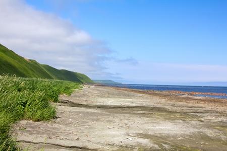 gramineous: Coast of Bering sea, supralitoral, tidal zone, gramineous meadows