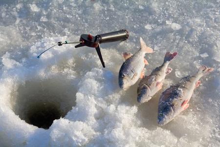 perch fishing 6 Stockfoto