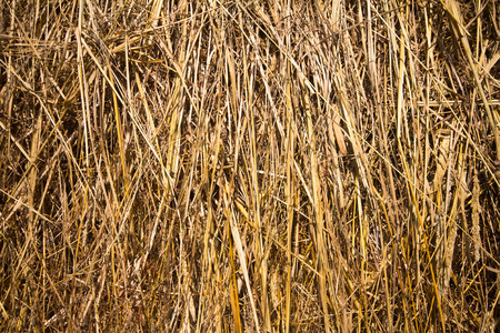 haymow: Dry hay closeup image as natural background