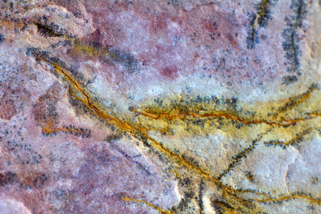paleontology: paleontology: invertebrate fossils (not museum) Stock Photo