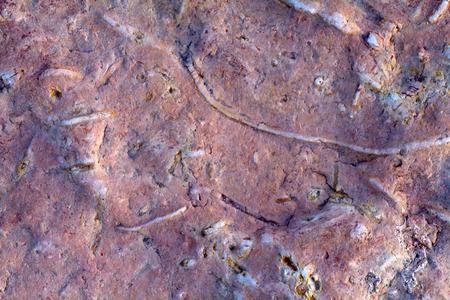 invertebrate: paleontology: invertebrate fossils