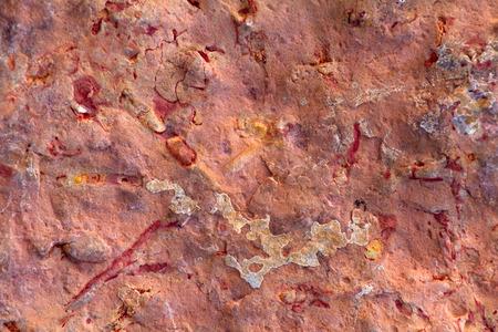 paleontology: paleontology: invertebrate fossils