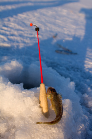natural ice pastime: ruff on ice  fishing in the middle of the winter Stock Photo