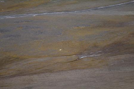 birds eye: Polar bear in  birds eye panorama. Northern island of Novaya Zemlya