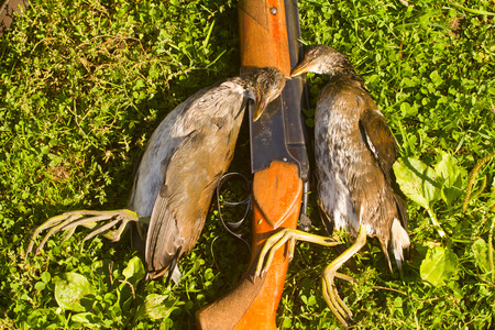 bogs: gun and two crake on successful hunting on bogs