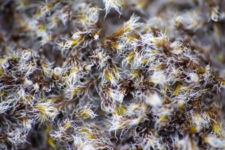 turf bog: Arctic prairie plants - backgrounds of polar bald mountain macro shooting. summer