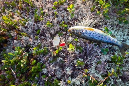 brook trout: catching of salmon fish on a bait lire