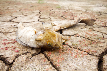 dearth: water level fell in lake and fauna perishes Stock Photo