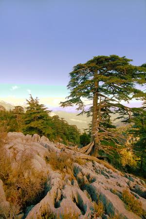 voices: las tierras altas de los bosques de pino y voces de las aves