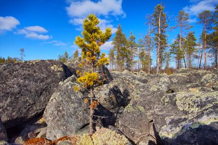 educacion ambiental: Montones de rocas de granito en la taiga. Posici�n baja de la c�mara. Foto de archivo