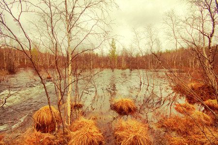 time deficit: Picture of spring floods. Transparent water flow in  birch forest. Stock Photo