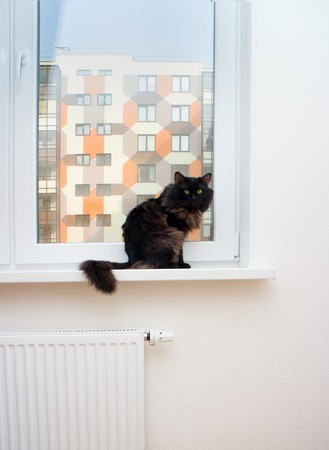undeveloped: cat in a new house first undeveloped Stock Photo