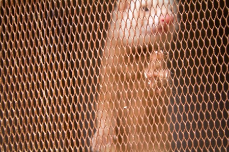 peltry: Mink placed in a cage.  animal behind the net is torn out