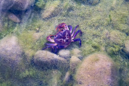 hydrobiology: Land river crab sits at  bottom of  transparent reservoir. View from  top. Stock Photo