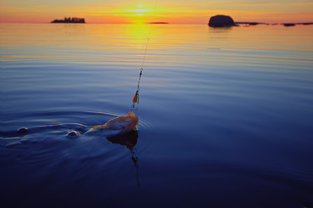 fishingpole: summer catching fishing of a perch in the evening Stock Photo