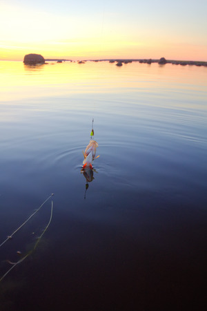 fish water: summer catching fishing of a perch in the evening Stock Photo