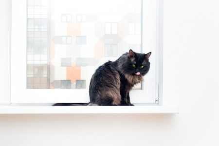 likable: cat in a new house first undeveloped Stock Photo