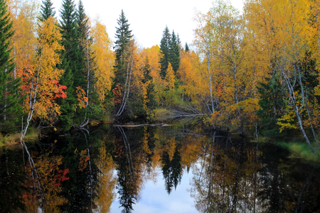 floatable: mountain river with rapids in  fall,  leaves are floating on  water. Autumn forest