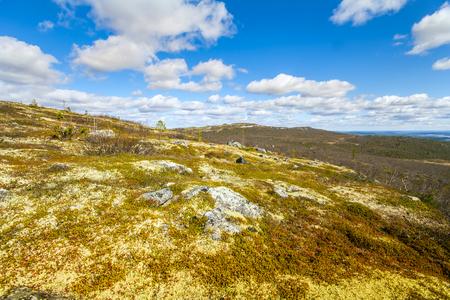 educacion ambiental: tundra de la montaña y el bosque en el fondo del paisaje maravilloso polar