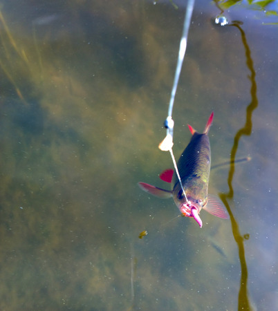 redeye: fishing on freshwater lakes in the reeds