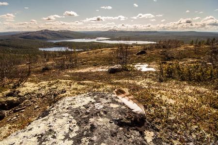 educacion ambiental: tundra de la monta�a y el bosque en el fondo del paisaje maravilloso polar