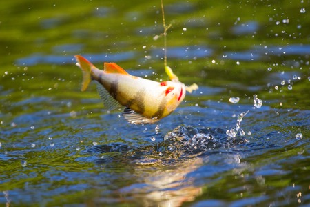 freshwater: fishing on freshwater lakes in the reeds