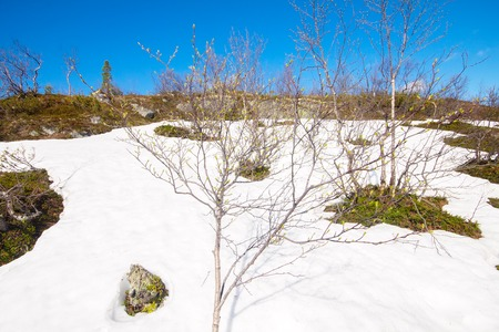 concealing: winter leaves snow thawing, spring comes