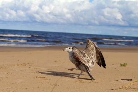 caught: seagull caught in a fishing line Stock Photo