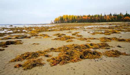 falling tide: background autumn seaside landscape at low tide.