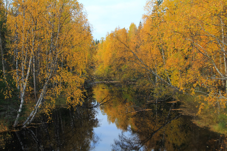 salmon falls: mountain river with rapids in  fall,  leaves are floating on  water. Autumn forest. Stock Photo