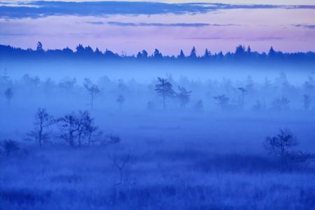 mire: haze grass and pine in  rising sun Stock Photo