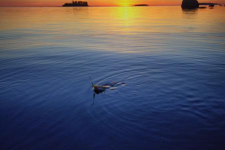 fishingpole: summer catching fishing of a perch in evening