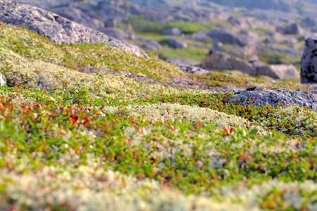 environmental education: tundra de la monta�a cerca de la costa del mar maravilloso paisaje polar