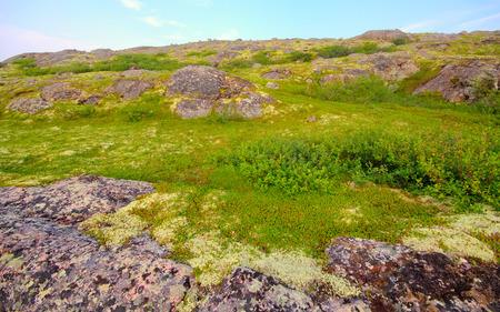 environmental education: mountain tundra near sea coast  wonderful polar landscape