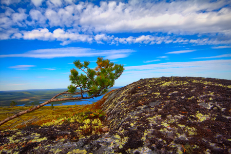 environmental education: mountain tundra and forest at  bottom of  wonderful polar landscape