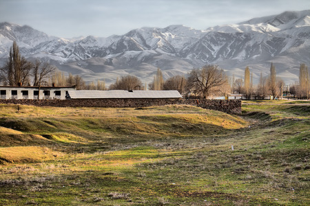 monta�as nevadas: Kazakh village in foothills of Kopet Dagh ridge, Middle Asia 1. Kishlak (village) with Lombardy poplar (Populus pyramidalis) and Spanish broom (Spartium junceum) on background of snowy mountains