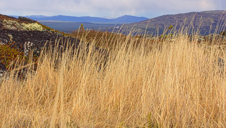 sways: Dry grass sways in wind, mountains in background Stock Photo