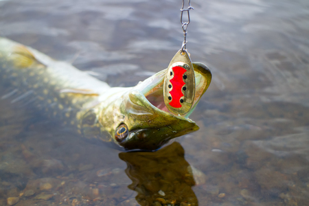 pike fishing big Northern fish